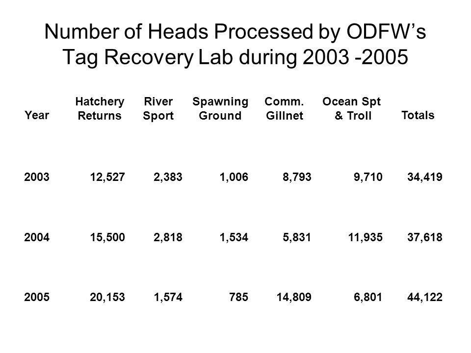 Number of Heads Processed by ODFW's Tag Recovery Lab during 2003 -2005