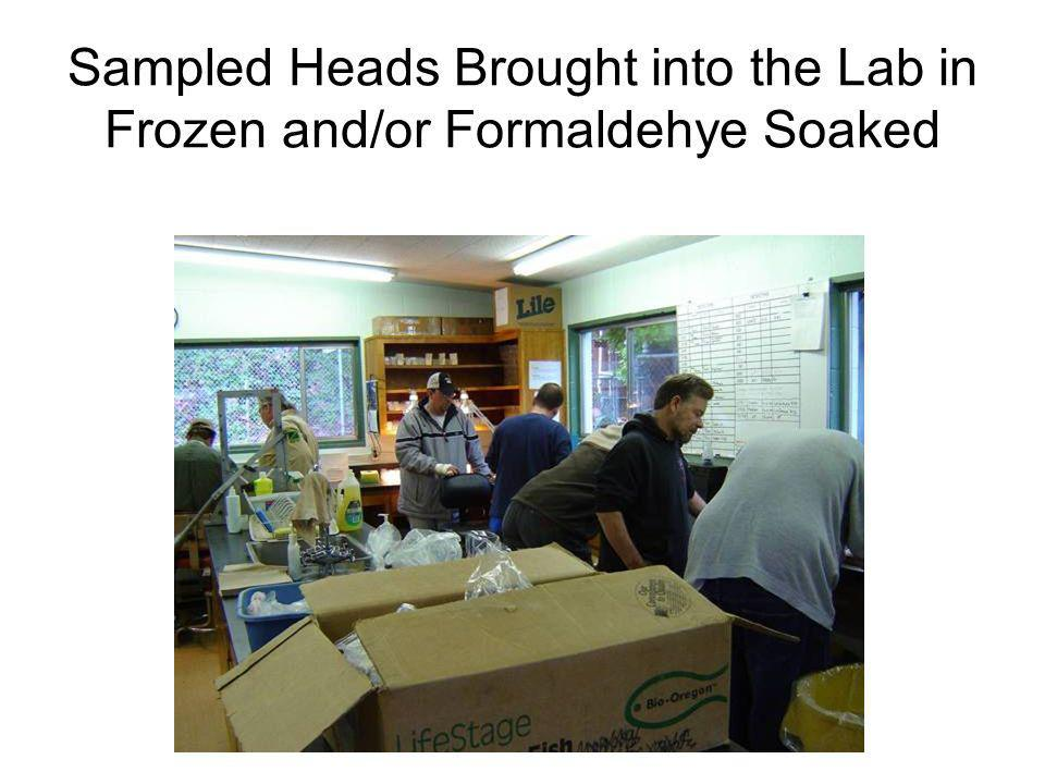 Sampled Heads Brought into the Lab in Frozen and/or Formaldehye Soaked