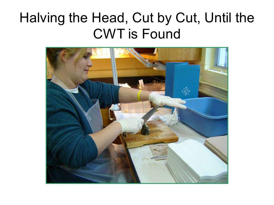 Halving the Head, Cut by Cut, Until the CWT is Found