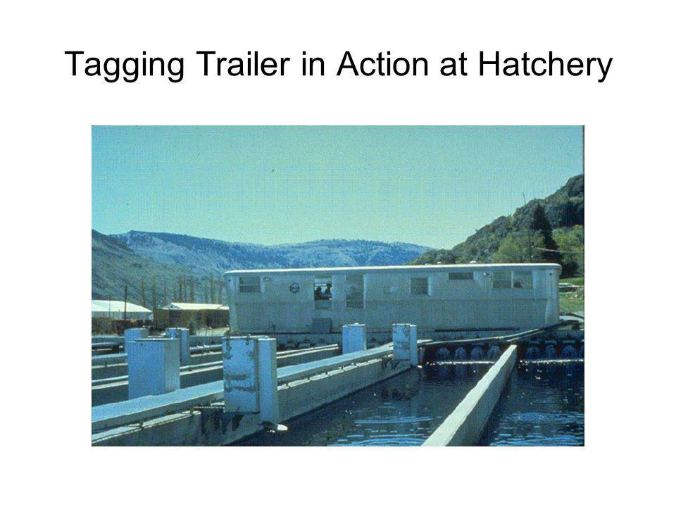 Tagging Trailer in Action at Hatchery
