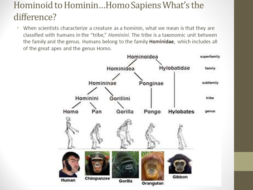 "homo sapiens and the great apes ""mammalian hybrids,"" includes homo sapiens (that's us), but tersely  some  people have written that great-apes males practice infanticide."