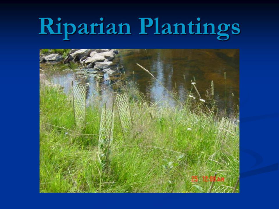 Riparian Plantings