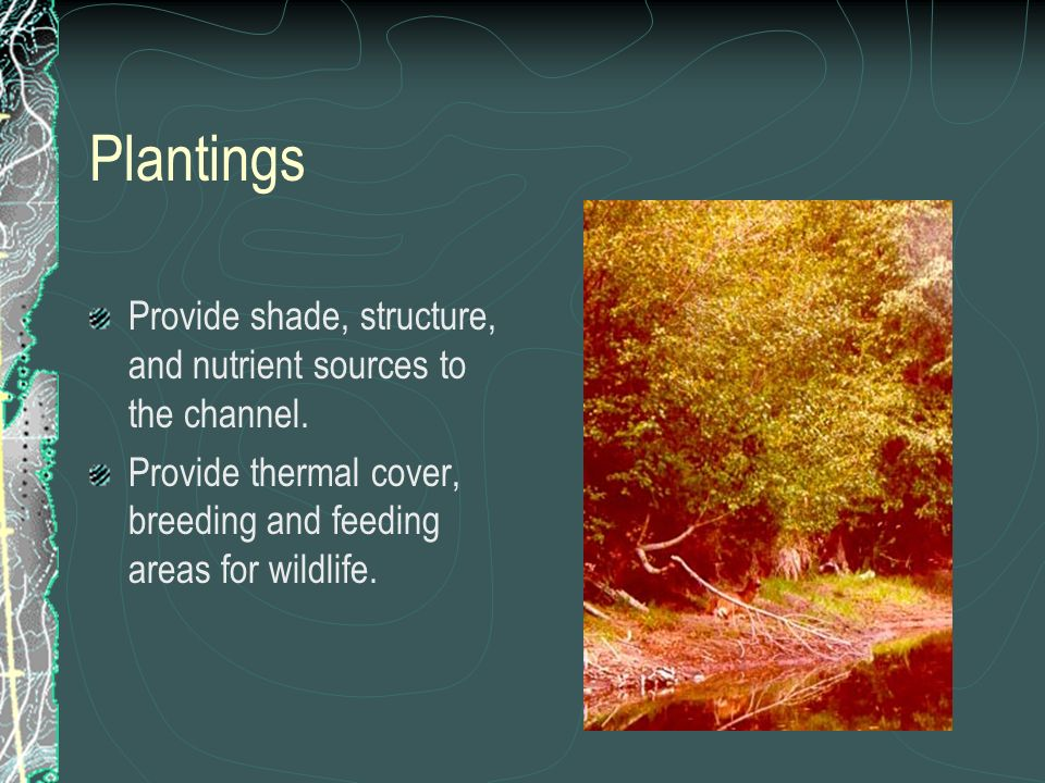 PlantingsProvide shade, structure, and nutrient sources to the channel. Provide thermal cover, breeding and feeding areas for wildlife.