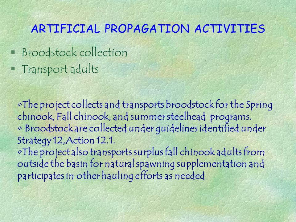 ARTIFICIAL PROPAGATION ACTIVITIES