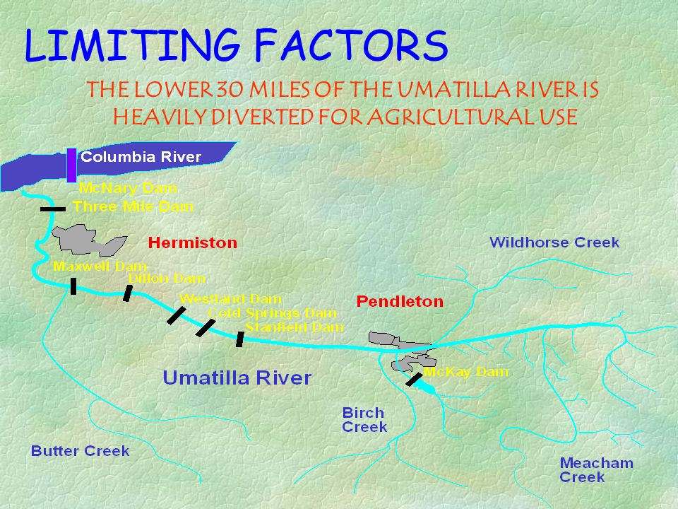 LIMITING FACTORS THE LOWER 30 MILES OF THE UMATILLA RIVER IS