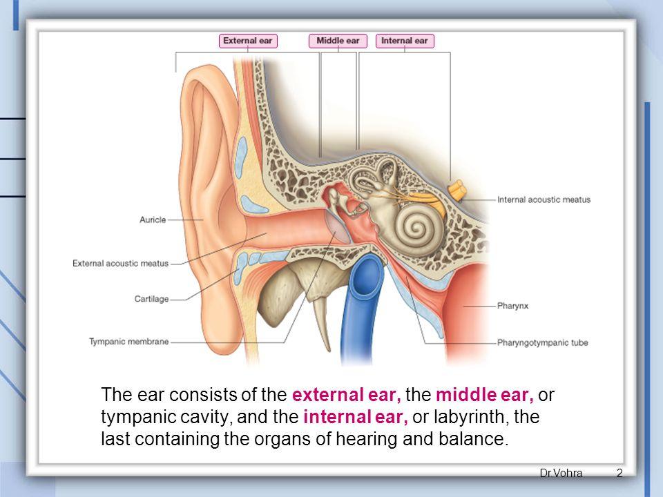 Middle Ear Cavity Anatomy Images - human body anatomy