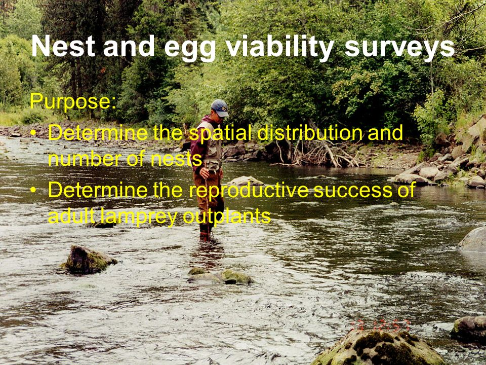Nest and egg viability surveys