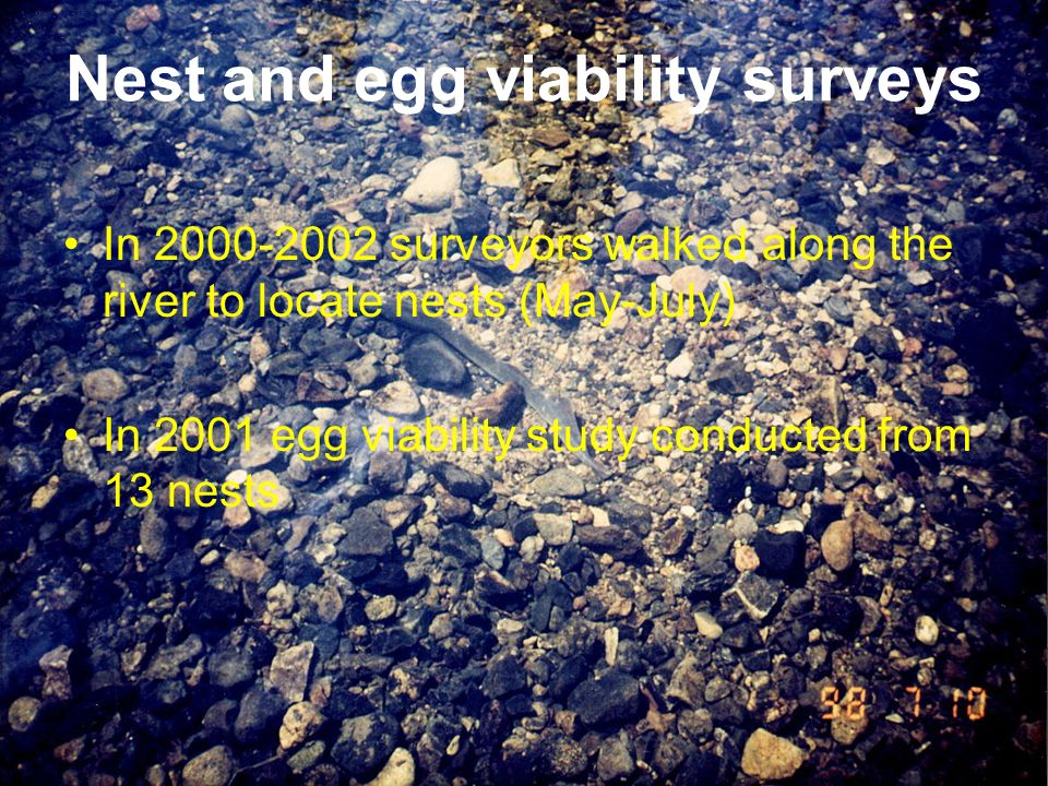 Nest and egg viability surveys