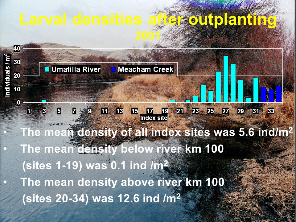 Larval densities after outplanting
