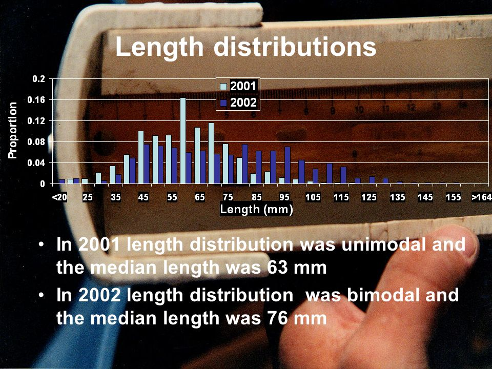 Length distributions In 2001 length distribution was unimodal and the median length was 63 mm.