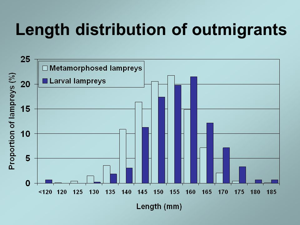 Length distribution of outmigrants