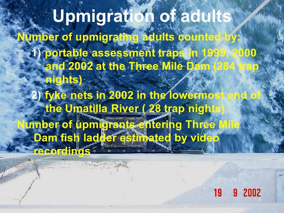 Upmigration of adults Number of upmigrating adults counted by: