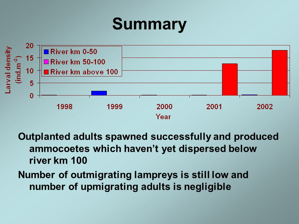 Summary Outplanted adults spawned successfully and produced ammocoetes which haven't yet dispersed below river km 100.