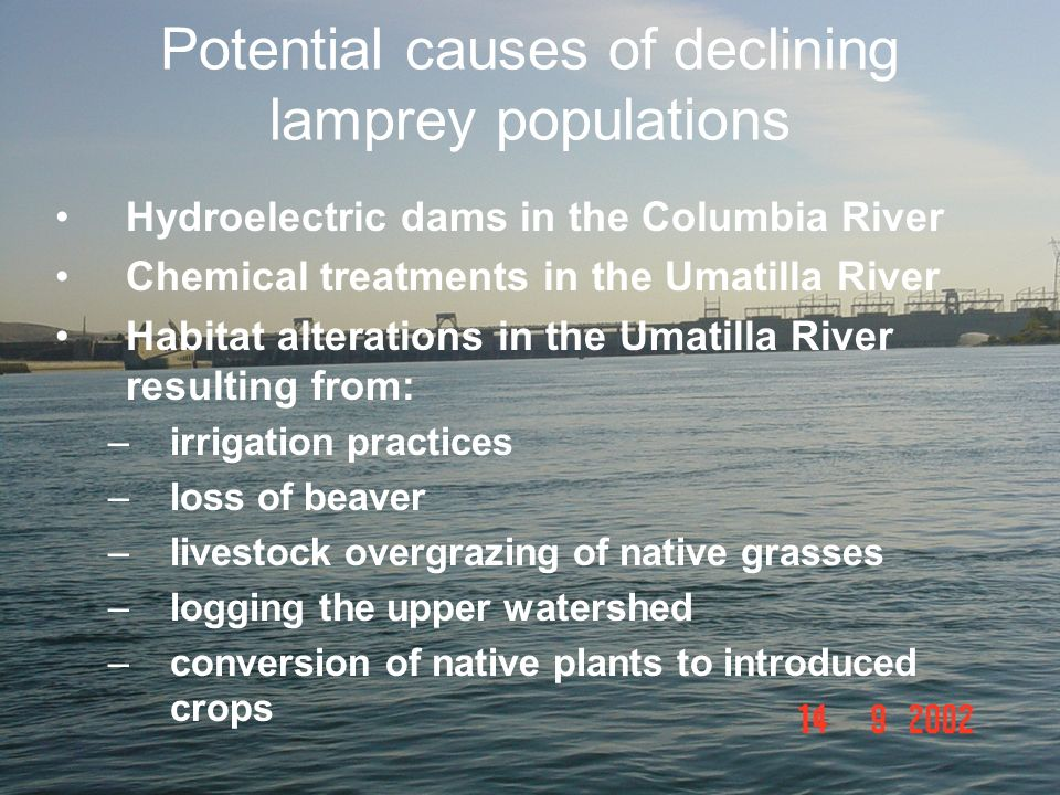 Potential causes of declining lamprey populations