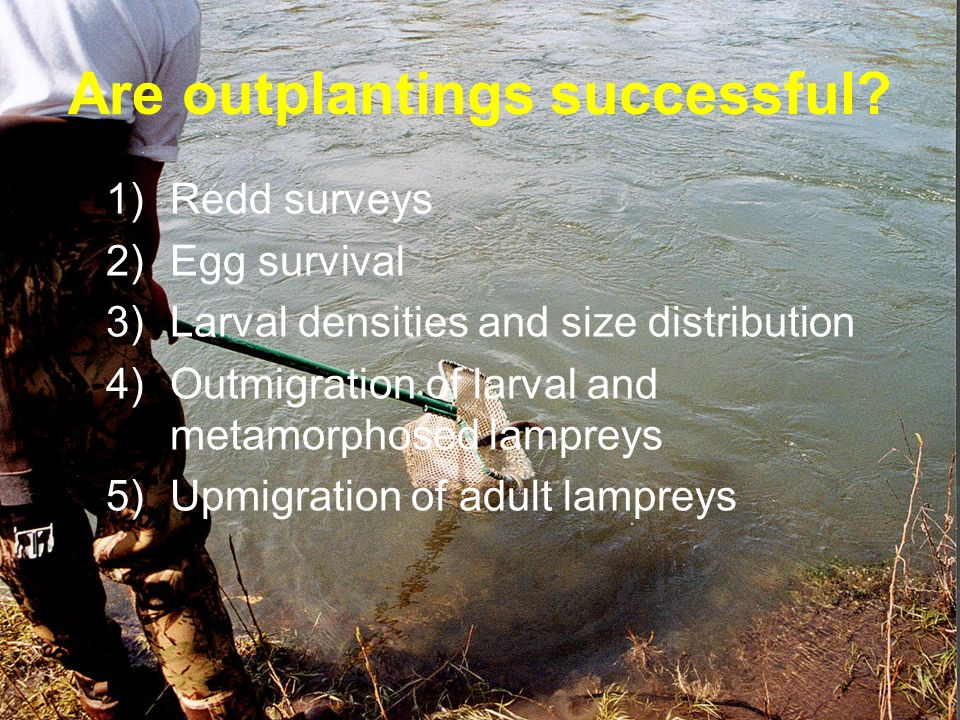 Are outplantings successful