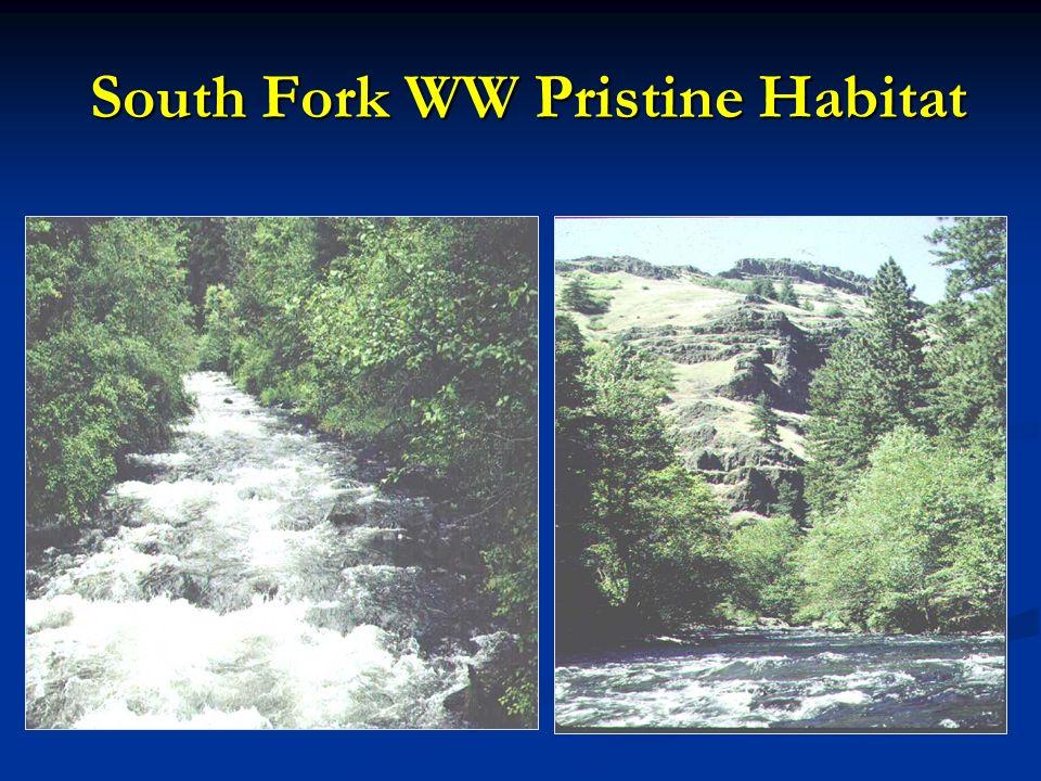 South Fork WW Pristine Habitat