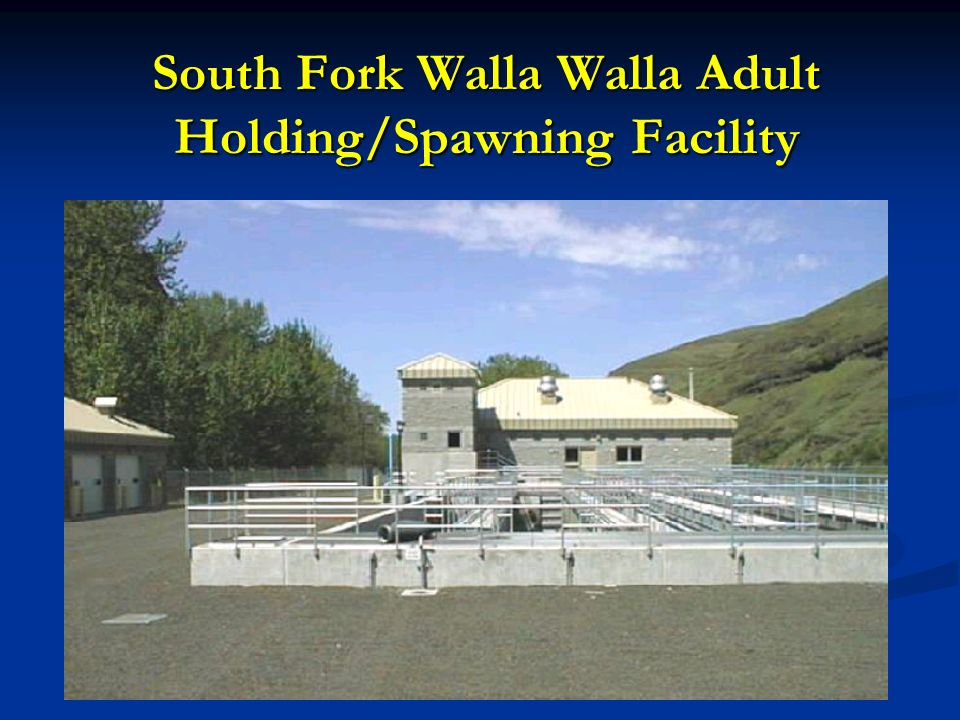 South Fork Walla Walla Adult Holding/Spawning Facility