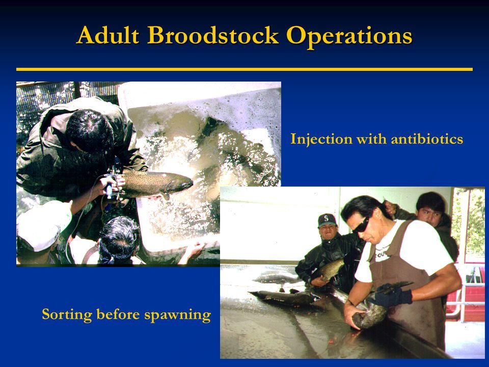 Adult Broodstock Operations