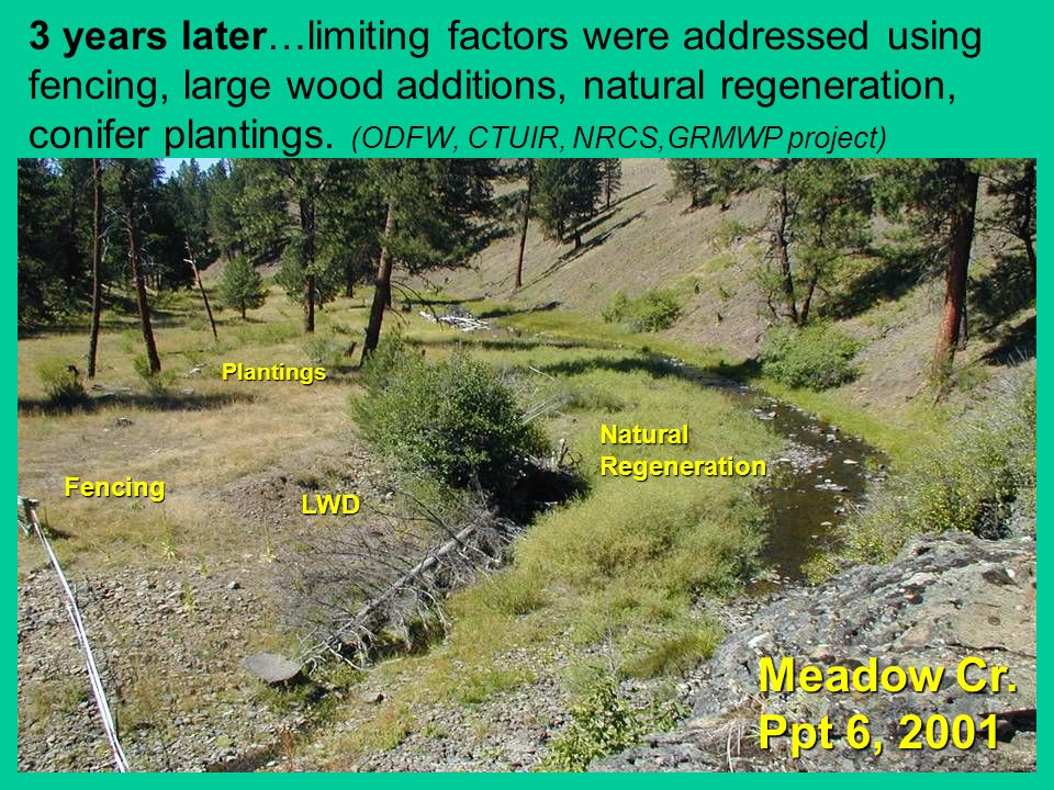 3 years later…limiting factors were addressed using fencing, large wood additions, natural regeneration, conifer plantings. (ODFW, CTUIR, NRCS,GRMWP project)