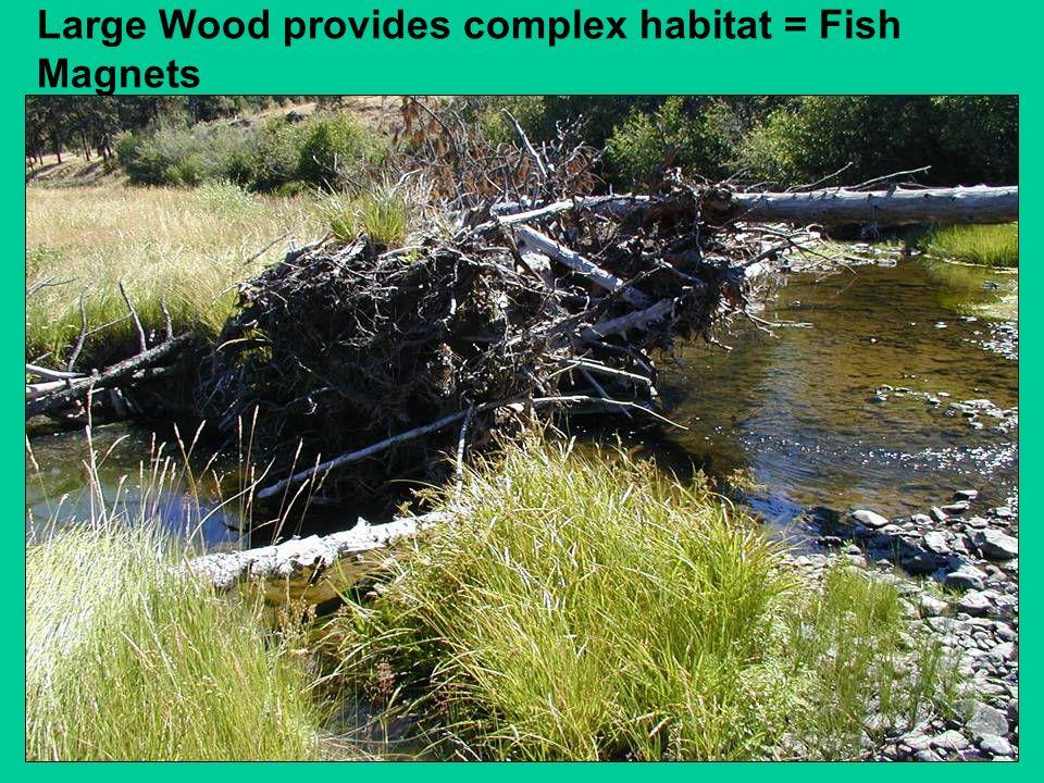 Large Wood provides complex habitat = Fish Magnets