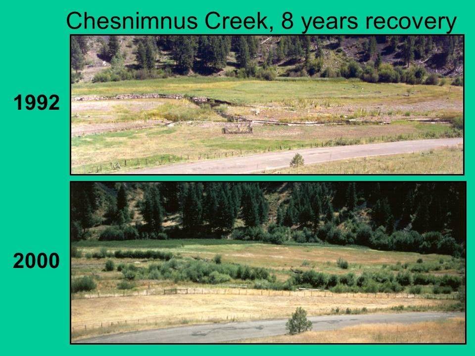 Chesnimnus Creek, 8 years recovery