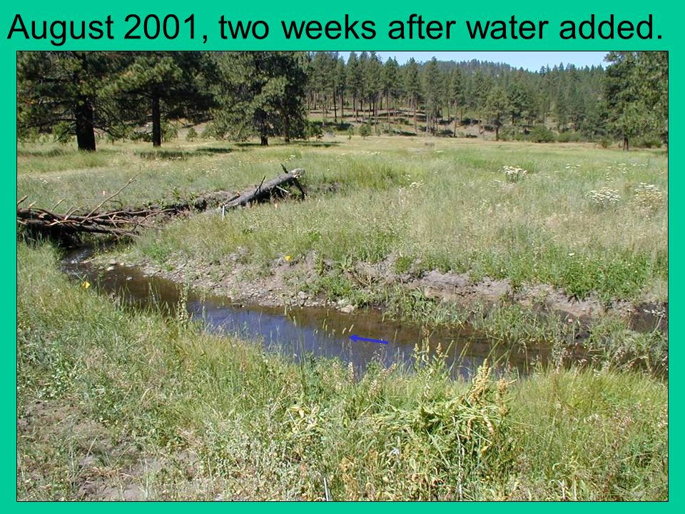 August 2001, two weeks after water added.