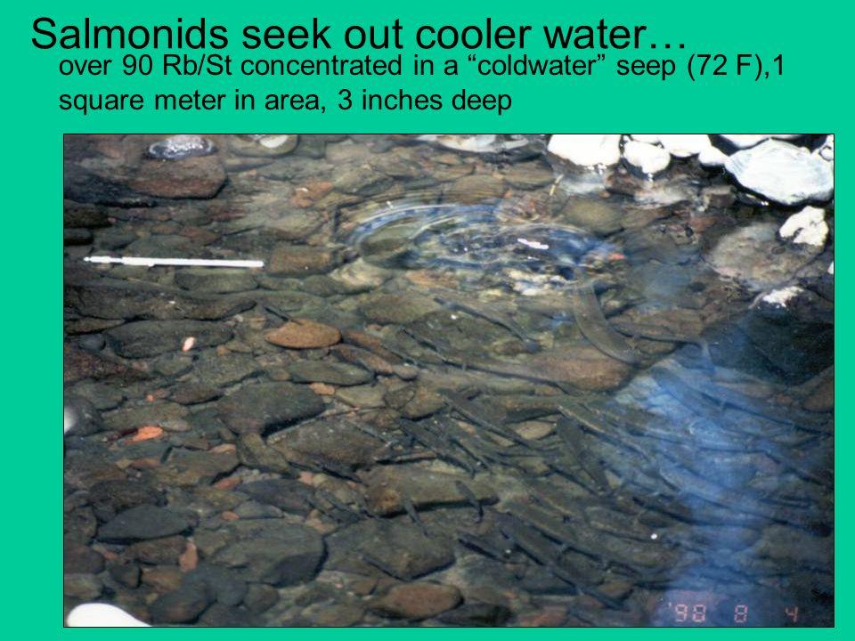 Salmonids seek out cooler water…