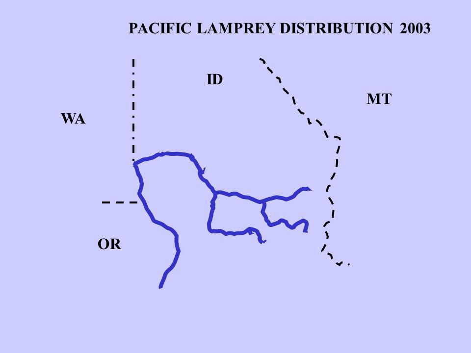 PACIFIC LAMPREY DISTRIBUTION 2003