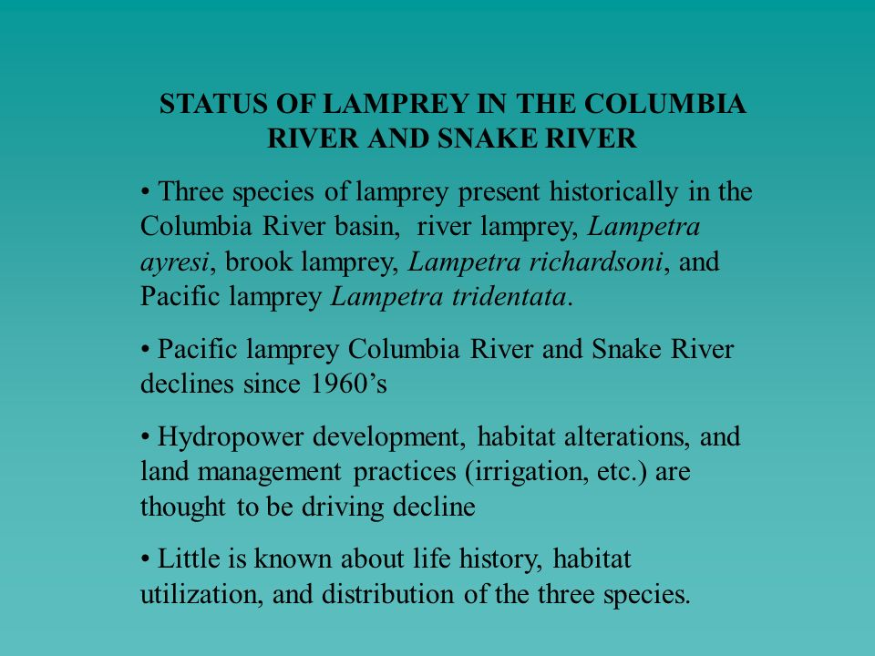 STATUS OF LAMPREY IN THE COLUMBIA RIVER AND SNAKE RIVER