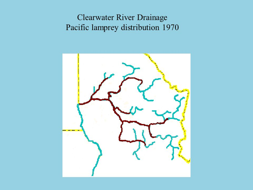 Clearwater River Drainage Pacific lamprey distribution 1970