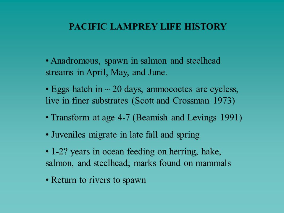 PACIFIC LAMPREY LIFE HISTORY