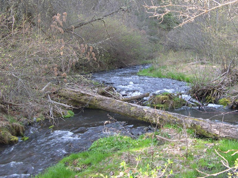 Charley Creek: High priority listed salmonid habitat stream.