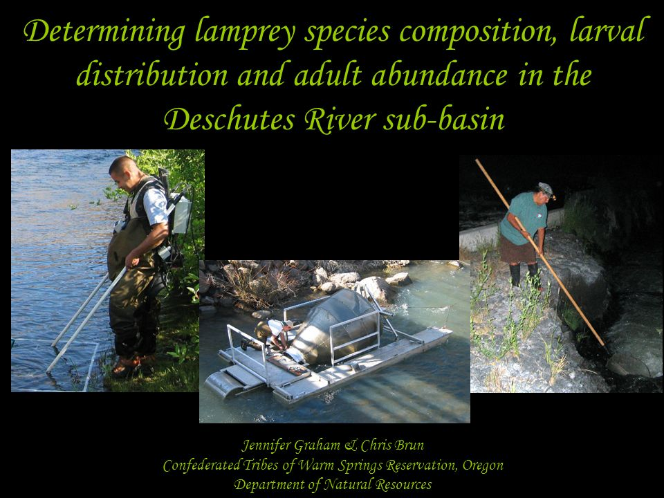 Determining lamprey species composition, larval distribution and adult abundance in the Deschutes River sub-basin