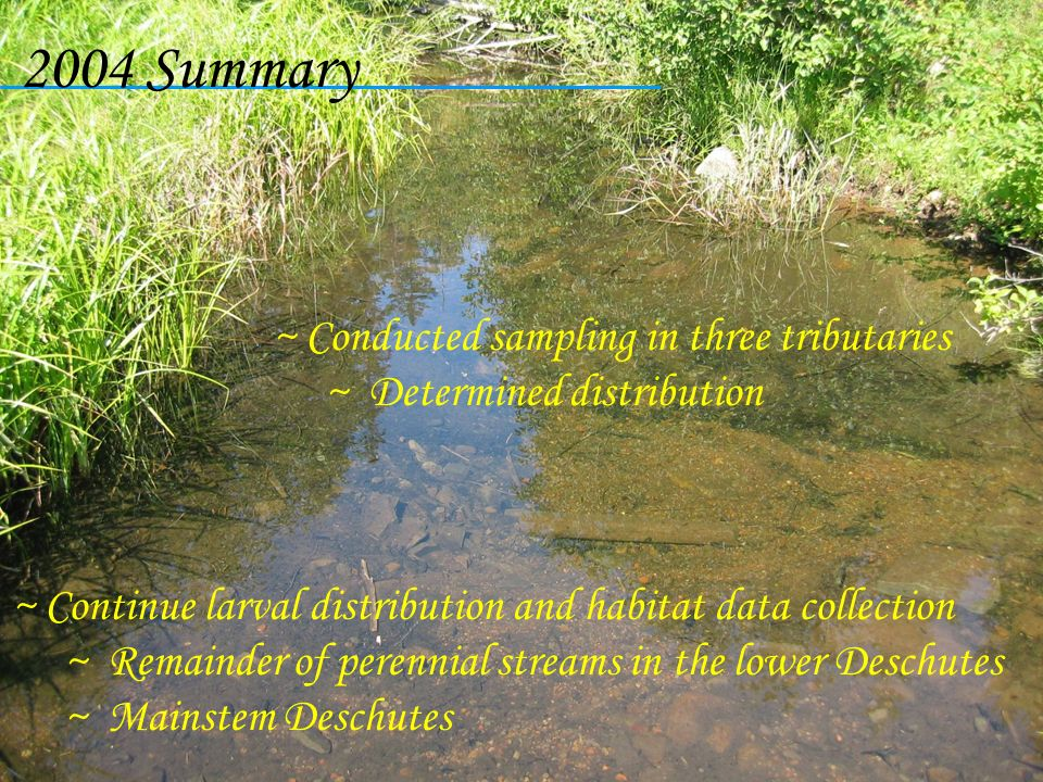 2004 Summary Conducted sampling in three tributaries