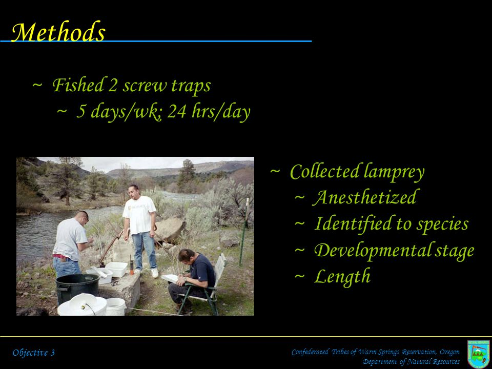 Methods Fished 2 screw traps 5 days/wk; 24 hrs/day Collected lamprey