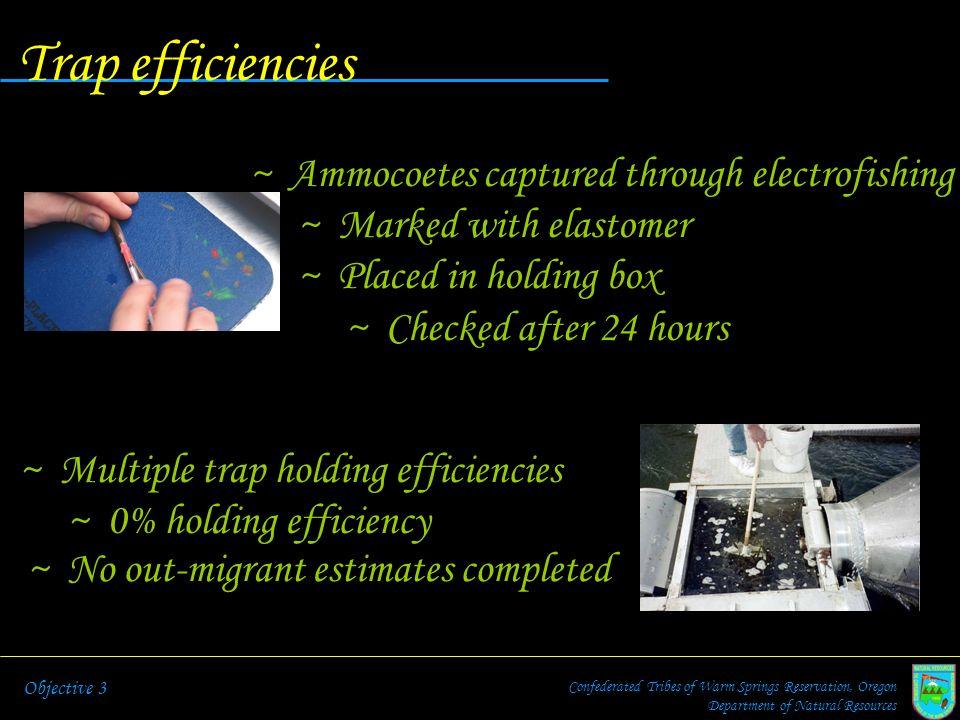 Trap efficiencies Ammocoetes captured through electrofishing