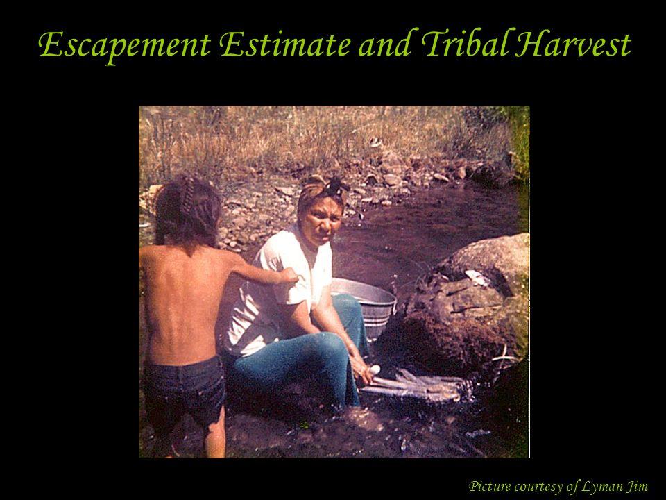 Escapement Estimate and Tribal Harvest