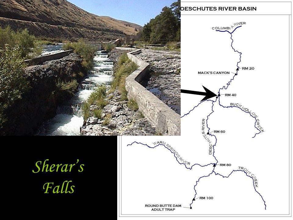 Sherar's Falls