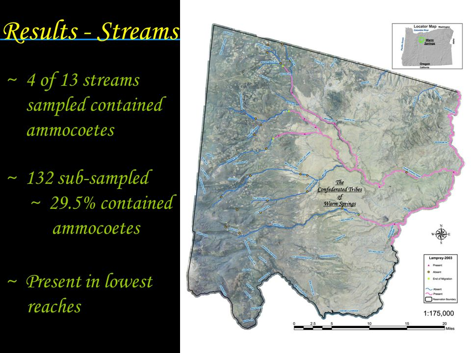 Results - Streams 4 of 13 streams sampled contained ammocoetes