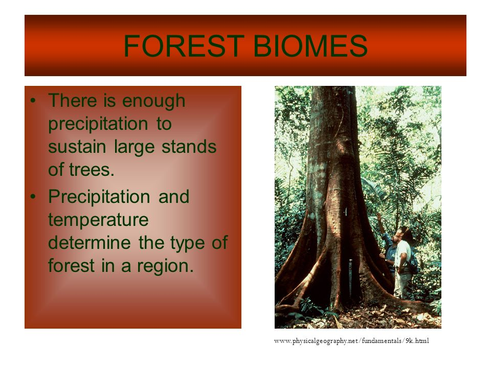 FOREST BIOMES There is enough precipitation to sustain large stands of trees.