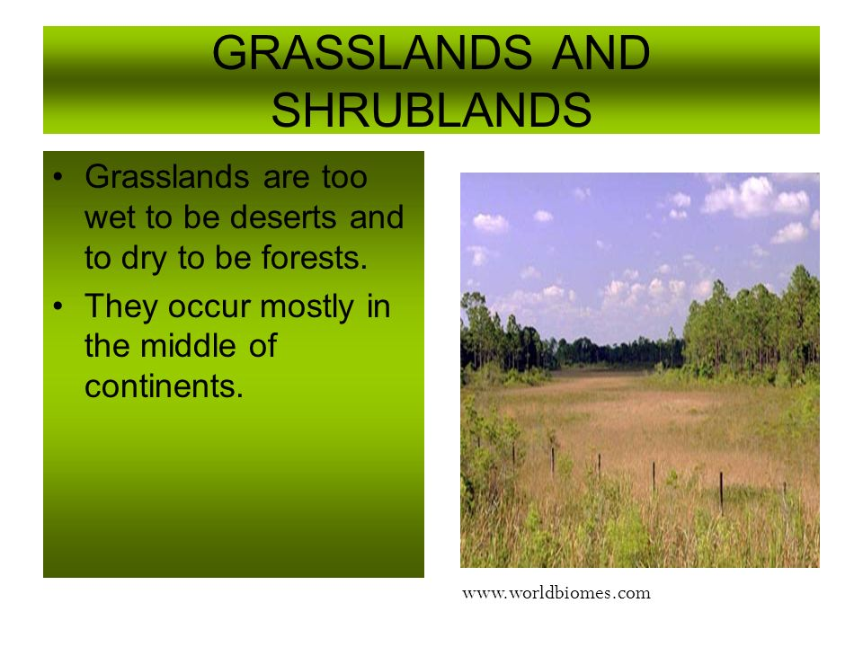GRASSLANDS AND SHRUBLANDS