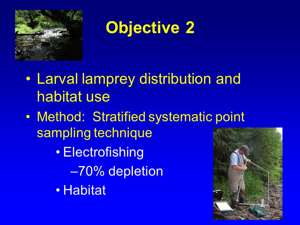Objective 2 Larval lamprey distribution and habitat use