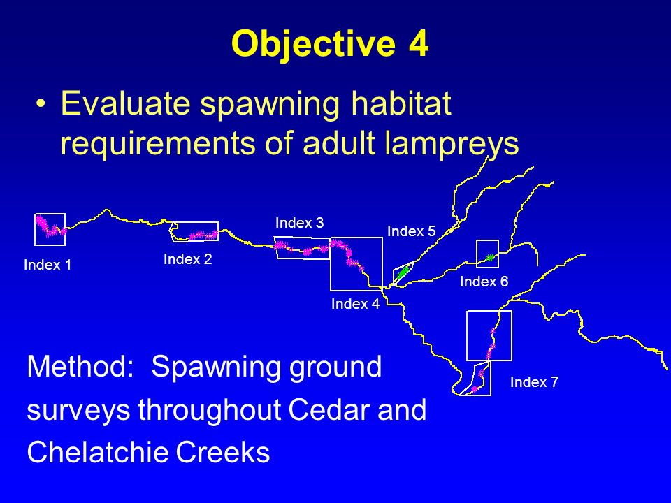 Objective 4 Evaluate spawning habitat requirements of adult lampreys
