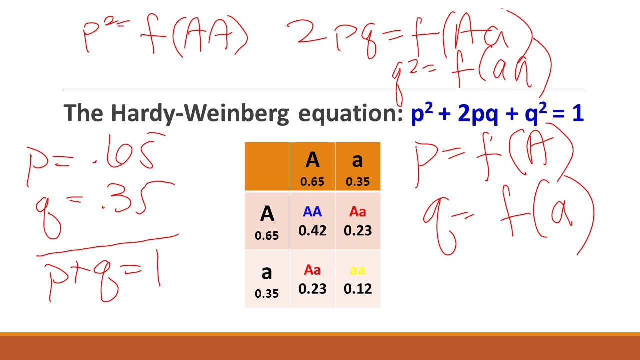The Hardy-Weinberg equation: p2 + 2pq + q2 = 1