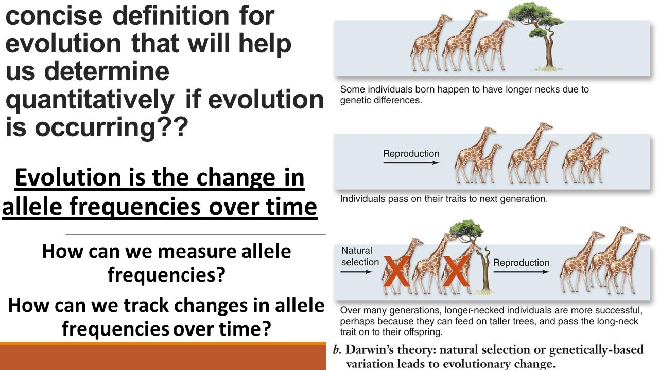 Evolution is the change in allele frequencies over time