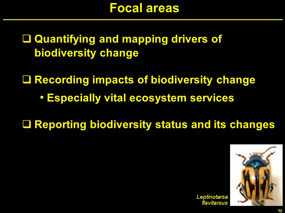 Focal areas Quantifying and mapping drivers of biodiversity change