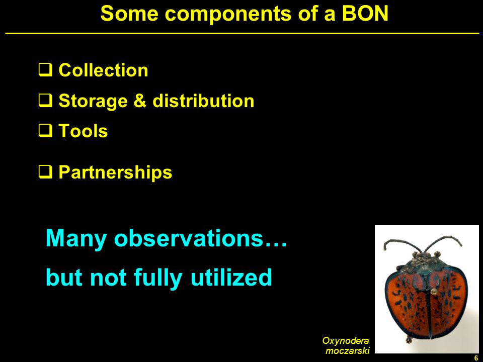 Some components of a BON
