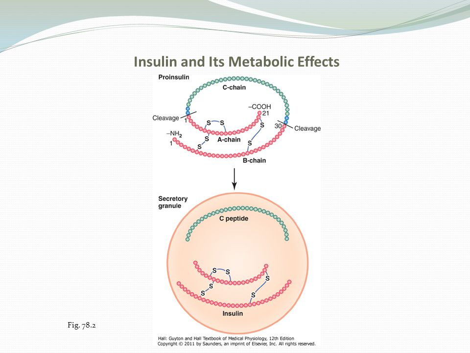 how insulin effects digestion The effects of insulin on the body medically reviewed by george krucik, md on september 29, 2014 — written by ann pietrangelo insulin is a hormone produced by the pancreas.
