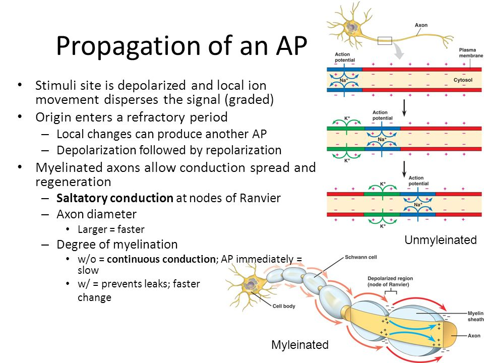 propagation of ap False echoes are known as anomalous propagation (ap) it is an echo that is not precipitation radar return from ap is unpredictable, often contaminates precipitation measurements and can cause the generation of erroneous rainfall estimates used in hydrology products.
