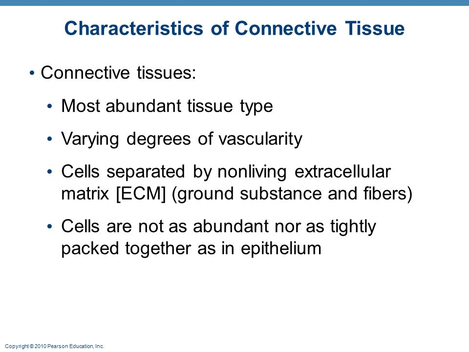 connective tissue characteristics In this lesson, you'll explore what dense regular connective tissue is, what elements compose the structure of this tissue, where it is found in.